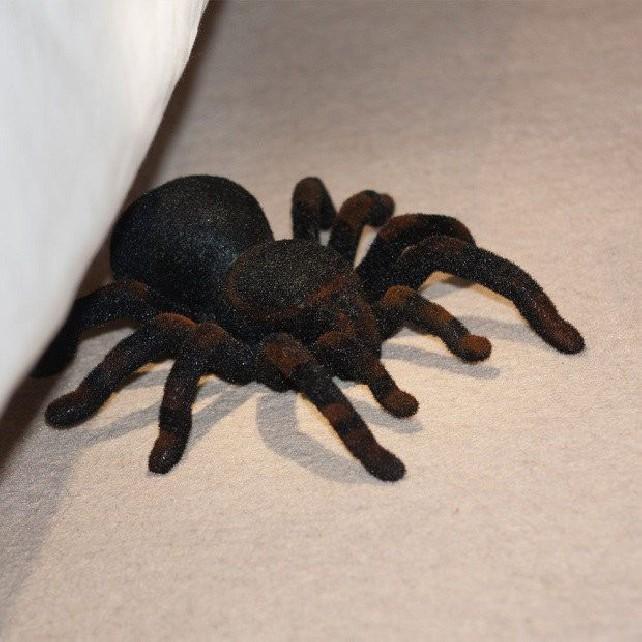 Zdalnie Sterowana Tarantula